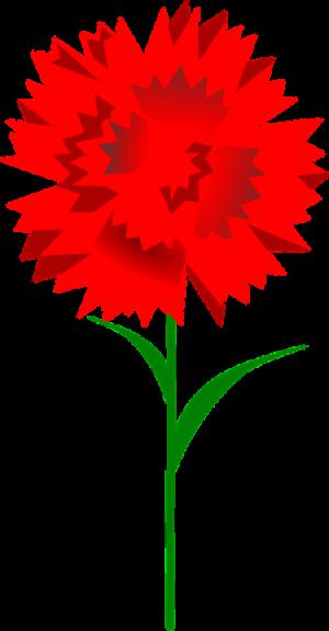 carnation-158016_960_720